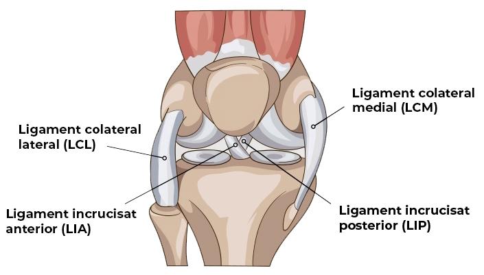 ligamentele genunchiului